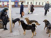Держкомпідприємництва врегулює проблему утримання безпритульних тварин в Україні