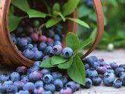 На китайском рынке появятся украинские ягоды